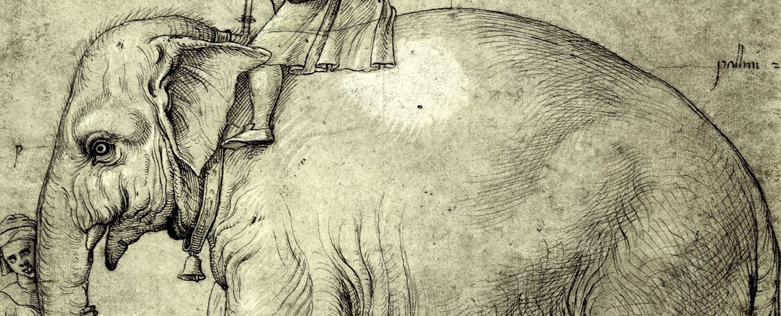 A drawing by Raphael of the Pope's Elephant